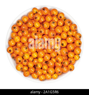 European rowan fruits in white bowl. Fresh ripe red seeds. Sorbus aucuparia, also mountain-ash. Fruits are used for jam or liqueur. Closeup. - Stock Photo