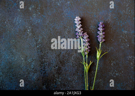 Lavender flowers laid on a dark blue background with wooden texture - Stock Photo