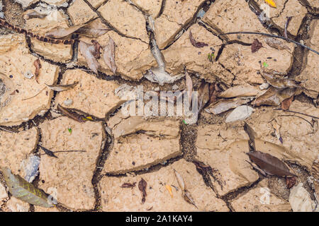 dry cracked earth. The desert. Background. It's hot, the global shortage of water on the planet. - Stock Photo