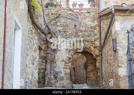 Stone arch next to an old plant in the hamlet of Montemerano. - Stock Photo