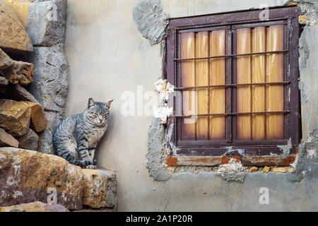Cat at the window on the street in Jaisalmer fort. Rajasthan. India