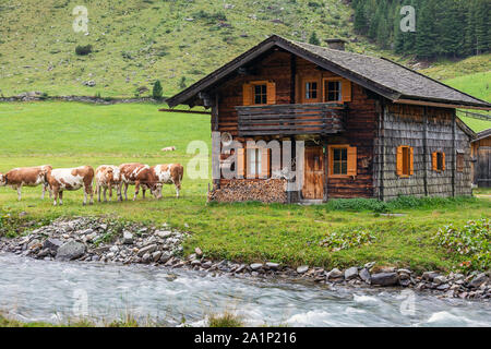 Wooden alm and grazing cows. Krimmler Achen valley. Hohe Tauern National Park. Austrian Alps. - Stock Photo