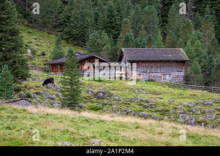 Wooden alpine alm and grazing cows. Krimmler Achen valley. Hohe Tauern National Park. Austrian Alps. - Stock Photo