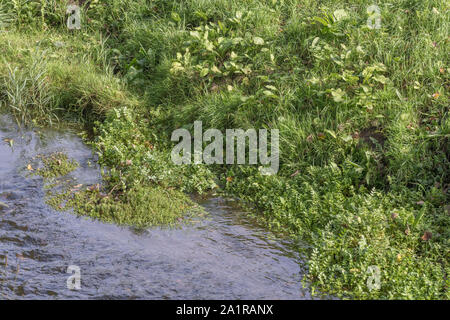 Mass of submerged aquatic weeds in a Cornwall drainage channel. Metaphor blocked, blockage, waterway management, among the weeds. - Stock Photo