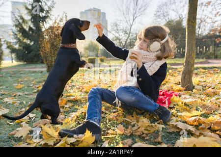 Girl child playing with dachshund dog in autumn sunny park, leaf fall golden hour - Stock Photo