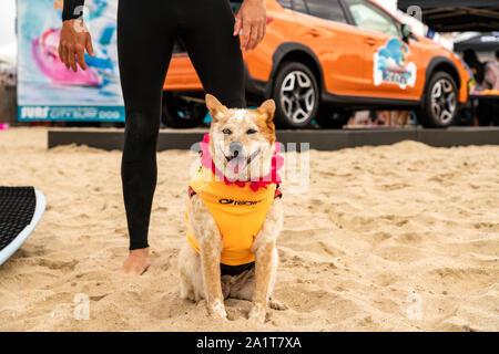 Huntington Beach, CA, USA. 28th Sept, 2019. Skyler before his heat. Credit: Ben Nichols/Alamy Live News - Stock Photo