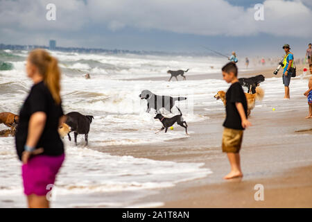 Huntington Beach, CA, USA. 28th Sept, 2019. A group of onlookers at the Surf Dog competition on Huntington Dog Beach. Credit: Ben Nichols/Alamy Live News - Stock Photo