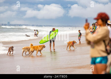 Huntington Beach, CA, USA. 28th Sept, 2019. A group of dogs play at the Surf Dog competition in Huntington Dog Beach. Credit: Ben Nichols/Alamy Live News - Stock Photo