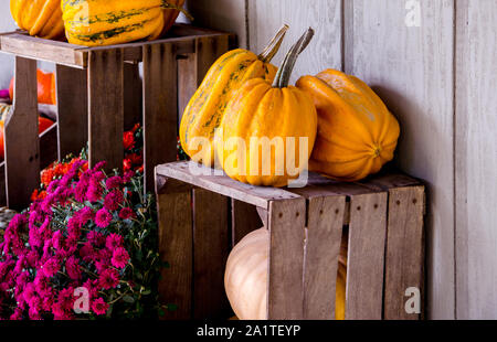 A beautiful fall still life shows off pretty mum and an arrangement of pumpkins and gourds on old wooden crates - Stock Photo