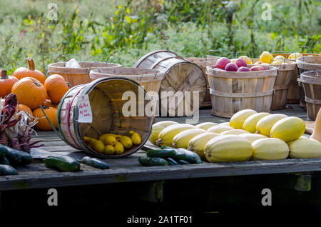A large wooden wagon bed holds a variety of fall harvest, with apples, pumpkins, zucchini, gourds, squash, cucumbers and Indian corn - Stock Photo