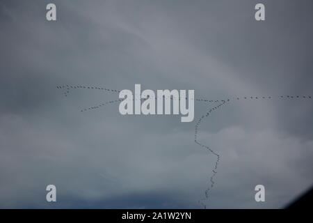 A large flock of migrating Cranes (Grus grus) in the sky above Recklinghausen, Germany - Stock Photo