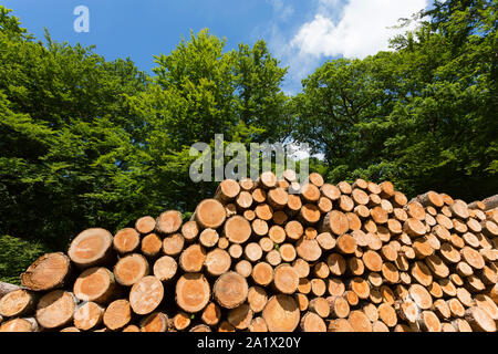 woodpile in deciduous forest - Stock Photo