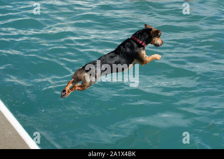 Penzance, Cornwall, UK. 29th September 2019. The Jubilee pool marked the last day of the season by opening the doors on the Lido pool to local dogs and their owners. Credit Simon Maycock / Alamy Live News. - Stock Photo