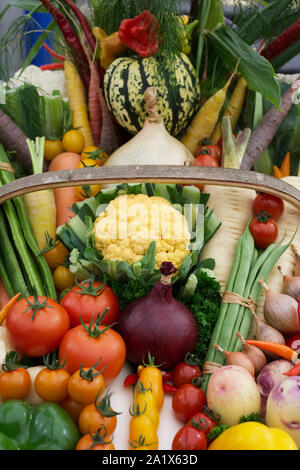 Harvest basket containing a selection of UK grown vegetables. - Stock Photo
