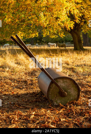 Old disused lawn roller abandoned in the field that was a cricket ground several years ago, propped up by a tree in autumn - Stock Photo