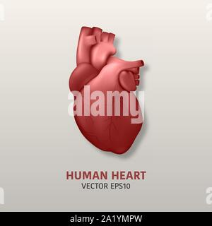 Vector 3d Realistic Glowing Health Heart Model with a Pulse Line Closeup, Medical Background . Design Template of Human Organ Anatomy, Medical Concept - Stock Photo