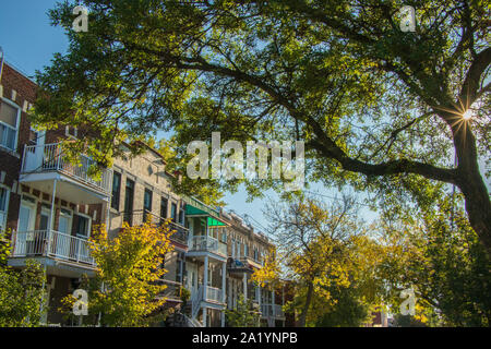 September 29, 2019 - Rosemont, Montréal, Canada: Montreal residential street and a sunburst through a tree by an autumn morning - Stock Photo