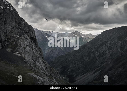Silhouette of falcon in the grey mountain valley with river and overcast rainy clouds in Karakol national park, Kyrgyzstan - Stock Photo