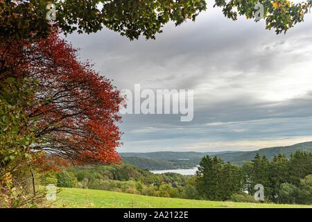 Eifel National Park Germany - Stock Photo