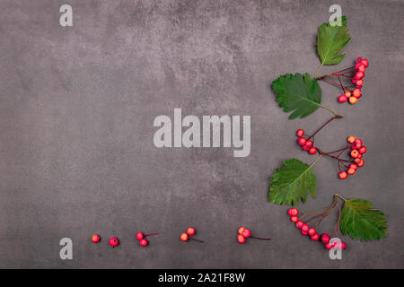Autumn frame from leaves and bunches of mountain ash. Background from autumn green and yellow leaves and tassels of red berries. Place for text - Stock Photo