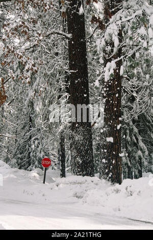 A stop sign in snow at Yosemite National Park. - Stock Photo