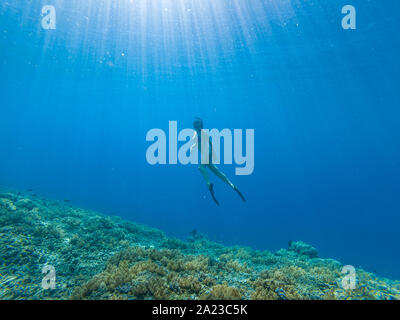 Young woman freediving in a clear sea over coral reef in Gili Meno Indonesia - Stock Photo