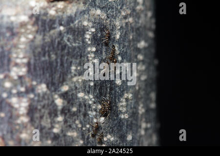 black ants crawling on tree trunk in the dark