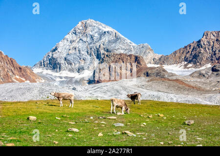 Famous Ortler mountain with a rock called Koenigsspitze at South Tyrol, Italy. Cows grazing in the foreground. - Stock Photo