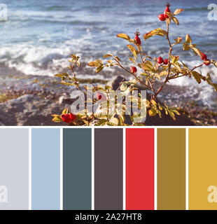 Color matching complementary palette from image of rosehip bush with red berries on a seaside on a sunny day - Stock Photo