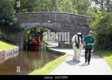A horse drawing a boat from Llangollen Wharf up the Dee valley towards Llantysilio - Stock Photo