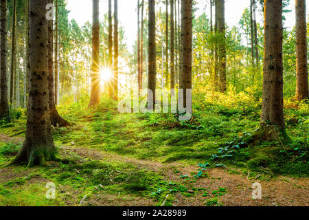 Beautiful forest in spring with bright sunlight shining through the trees - Stock Photo