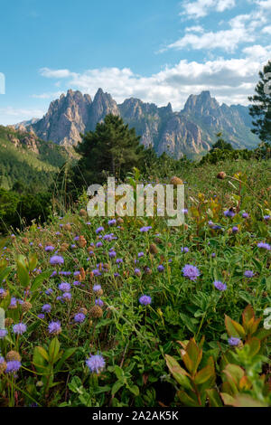 Wildflowers and the Aiguilles de Bavella rocky spikes of red granite - Col de Bavella mountain landscape - Regional Natural Park of Corsica France. - Stock Photo