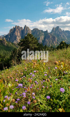 Wildflowers and the Aiguilles de Bavella mountains in the Col de Bavella mountain flora landscape of the Regional Natural Park of Corsica France. - Stock Photo