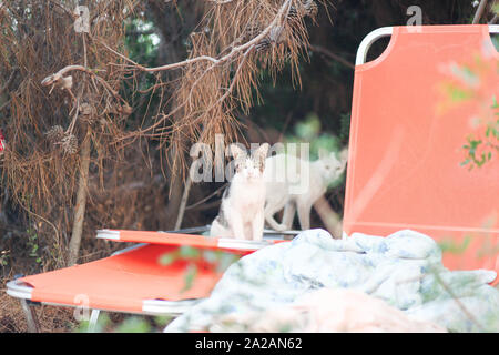 Cats of Greece, main focus being the stray cats that wander the Greece tourist areas looking for food. - Stock Photo