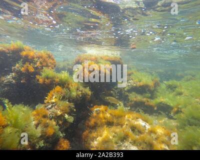 Underwater Mediterranean sea in Denia Alicante Spain La Nao cape nature reserve. - Stock Photo
