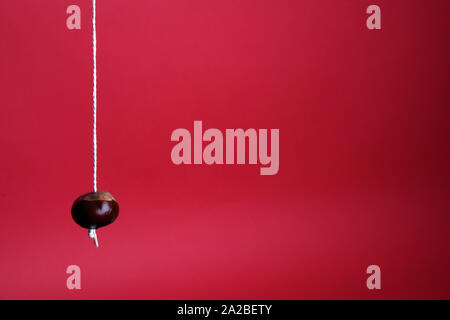 A single ripe conker on string isolated on a red background with copy space in Autumn - Stock Photo