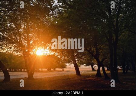 Autumn scene Misty Old Forest with Sun Rays. - Stock Photo