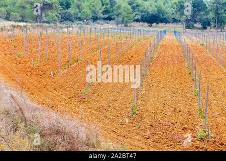autumn vineyards in Provence, France. - Stock Photo