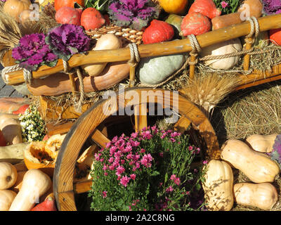 Thanksgiving day, wooden cart with pumpkins and vegetables on a hay. Autumn harvest holiday, festive decorations with flowers - Stock Photo