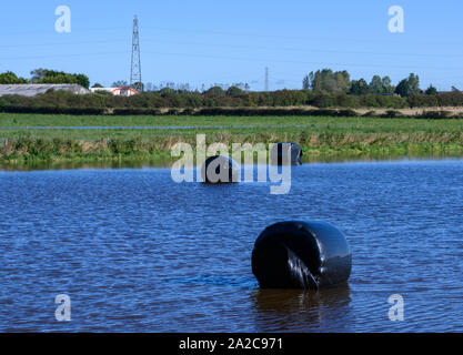 Hay bales covered in black plastic partially submerged by water in a farmers flooded field - Stock Photo