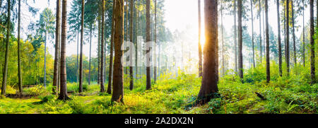 Wald im Sommer bei Sonnenaufgang - Stock Photo