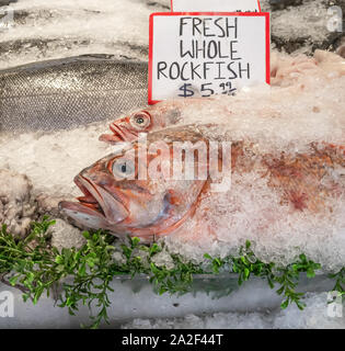 A pair of whole Pacific snapper rockfish on ice at a food stall in a public market in Seattle, Washington. - Stock Photo
