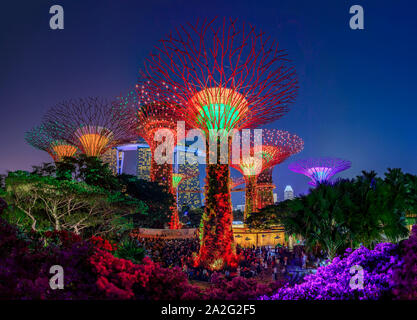 Colorful light show, Garden Rhapsody, set at sunset at the Supertree Grove at Gardens by the Bay in Singapore, a popular tourist attraction