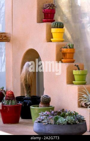 Desert cactus in colorful ceramic pots, make a beautiful indoor display - Stock Photo