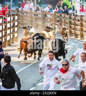 Running of the Bulls (Encierro) during the Fiestas de Santa Ana in Tudela, Spain - Stock Photo