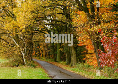 Forest path on the 'Mossauer Höhe' near Erbach in the Odenwald region, Hesse, Germany - Stock Photo