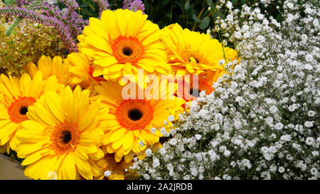 Yellow gerbera and small decorative white flowers - Stock Photo