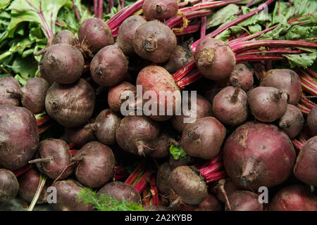 Red beets with tops on farmer's market close up - Stock Photo