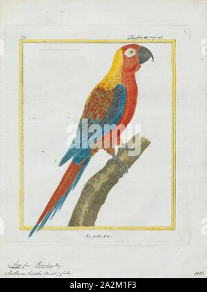 Ara tricolor, Print, The Cuban macaw or Cuban red macaw (Ara tricolor) was a species of macaw native to the main island of Cuba and the nearby Isla de la Juventud that became extinct in the late 19th century. Its relationship with other macaws in its genus was long uncertain, but it was thought to have been closely related to the scarlet macaw, which has some similarities in appearance. It may also have been closely related, or identical, to the hypothetical Jamaican red macaw. A 2018 DNA study found that it was the sister species of two red and two green species of extant macaws., 1700-1880 - Stock Photo