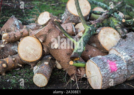 Wood cut in the spring - Stock Photo